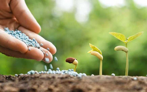 ЮТС поля насіння обробка